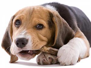 Петуха – в суп, собаке – косточку сахарную